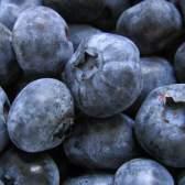 Користь чорниці для здоров'я: смачна дикорастущая ягода